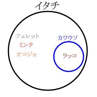 イタチの図