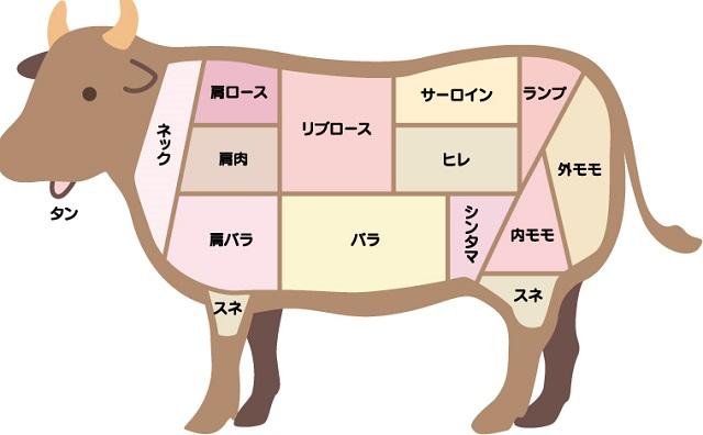 牛の断面図